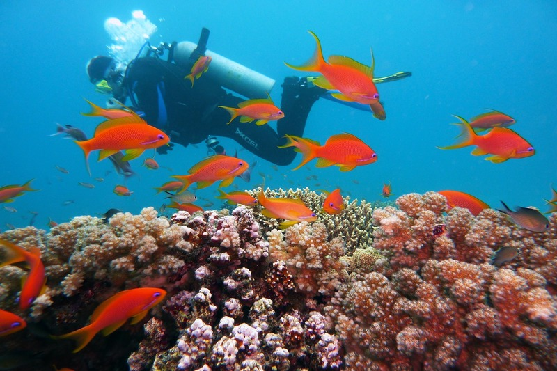 Amed, Bali | Diving