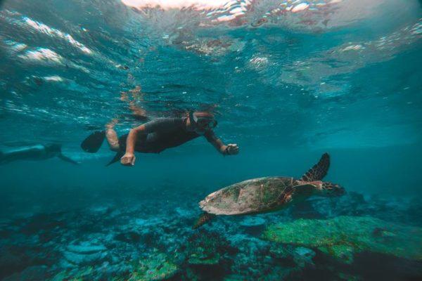 Man Snorkelling Turtle Nusa Lembongan Bali
